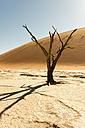 Africa, Namibia, Sossusvlei, Sand dune, Dead trees - HLF000487