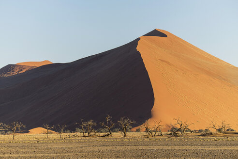Africa, Namibia, Sossusvlei, Trees and sand dunes at sunset - HLF000481