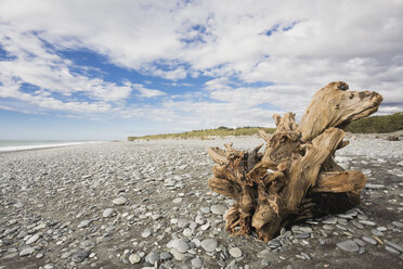 New Zealand, South Island, West Coast, Gillespies Beach, driftwood on beach - GWF002769
