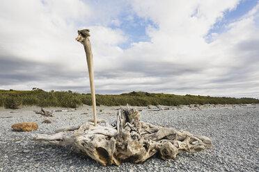 New Zealand, South Island, West Coast, Gillespies Beach, driftwood on beach - GWF002770