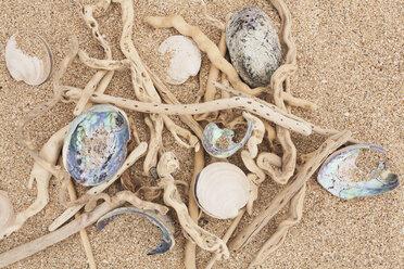 New Zealand, Driftwood, Paua Shells, Ringed Dosinia, Dosinia anus, on sandy beach - GWF002773