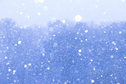 Snowstorm - DISF000830