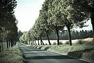 Germany, Baden-Wuerttemberg, Einsiedel near Tuebingen, Avenue in spring - LVF001231