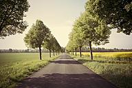 Germany, Baden-Wuerttemberg, Einsiedel near Tuebingen, Avenue in spring - LVF001234