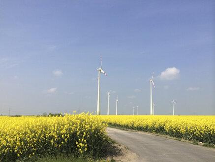 Wind turbine on a rape field in Brandenburg, Germany - FLF000422