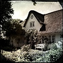 Germany, North Frisia, Foehr, Nieblum, thatched cottage in the village Nieblum - MMO000361