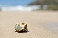 Australia, New South Wales, Broken Bay, shell of a sea snail at the beach - SHF001277
