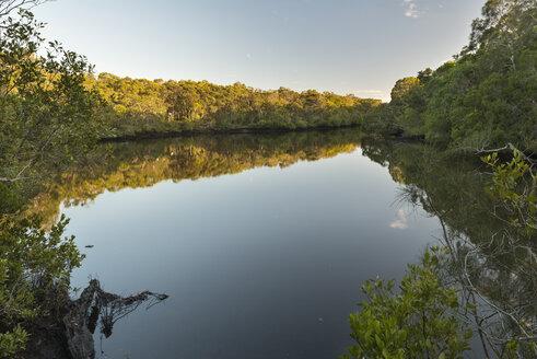 Australia, New South Wales, Pottsville, Cudgera Creek - SHF001280