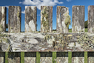 Australia, New South Wales, Dorrigo, old wooden fence with lichens, partial view - SHF001304