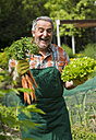 Germany, Hesse, Lampertheim, portrait of laughing senior gardener with bunch of carrots and head of lettuce - UUF000580