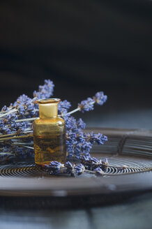 Lavender oil in a glass bottle, twigs of lavender, Lavandula angustifolia - ASF005360