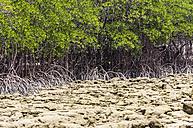 Indonesia, Riau Islands, Bintan, Nikoi Island, Mangroves - THAF000368