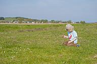 Germany, Mecklenburg-Western Pomerania, Ruegen, Boy picking flowers from meadow - MJF001208