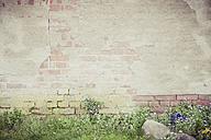 Germany, Mecklenburg-Western Pomerania, Ruegen, Brick wall - MJF001178
