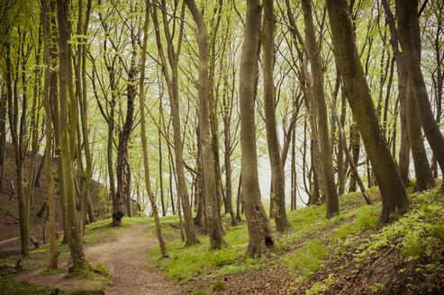 Germany, Mecklenburg-Western Pomerania, Ruegen, Jasmund National Park, Beech forest - MJF001194