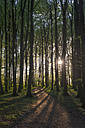 Germany, Mecklenburg-Western Pomerania, Ruegen, Jasmund National Park, Beech forest at sunset - MJF001269