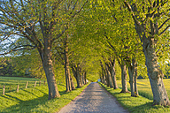Germany, Mecklenburg-Western Pomerania, Ruegen, Tree-lined path - MJF001254