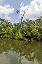 Indonesia, Riau Islands, Bintan Island, Mangrove trees - THAF000388