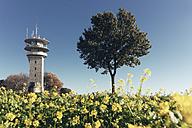 Germany, North Rhine-Westphalia, Longinus Tower behind rape field - MEMF000020