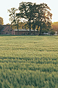 Germany, North Rhine-Westphalia, Farmhouse in Coesfeld heath - MEMF000022