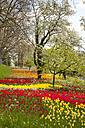 Germany, Baden-Wuerttemberg, Mainau, Blooming trees and tulips - WIF000694