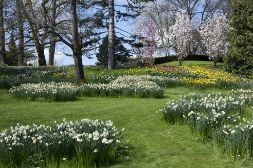 Germany, Baden-Wuerttemberg, Mainau, Blooming tulips and daffodils - WIF000704