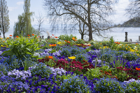 Germany, Baden-Wuerttemberg, Mainau, Blooming flowers at lakeshore - WIF000711