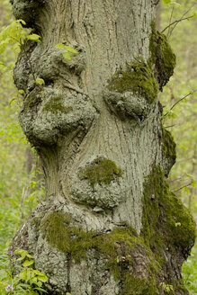 Germany, Thuringia, tree with face - SJF000111