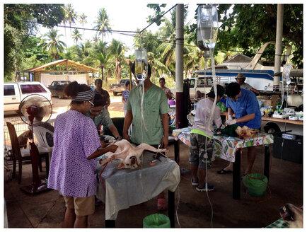 Thailand, Koh Mak, Mobile Veterinarians - AVS000212