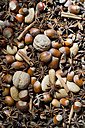 Star anise, walnuts, hazelnuts, almonds and cinnamon sticks, partial view - ASF005404