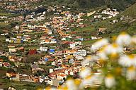 Spain, Canary Islands, Tenerife, San Cristobal de La Laguna - WGF000306