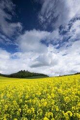 Germany, Baden-Wuerttemberg, Constance district, Hegau, Rape field, Maegdeberg in the background - ELF001041