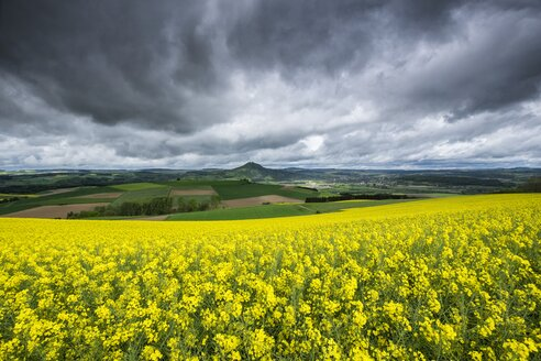 Germany, Baden-Wuerttemberg, Constance district, Hegau, Rape field, Hohenhewen in the background - ELF001043