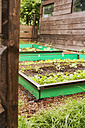 Garden with mixed vegetable patch and slug fence - ONF000567