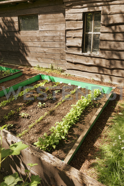 Garden with mixed vegetable patch and slug fence - ONF000570