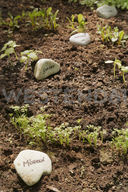 Garden with mixed vegetable patch - ONF000575
