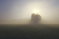 Germany, North Rhine-Westphalia, Tree and meadow, Morning mist and sunrise - ON000563