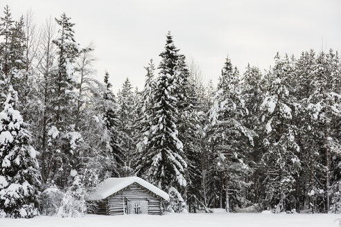 Scandinavia, Finland, Kittilaentie, Wooden hut at the edge of the forest - SR000533