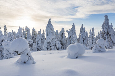 Scandinavia, Finland, Rovaniemi, Forest, Trees in wintertime against the sun - SR000538