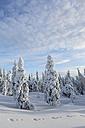 Scandinavia, Finland, Rovaniemi, Trees in wintertime - SR000540