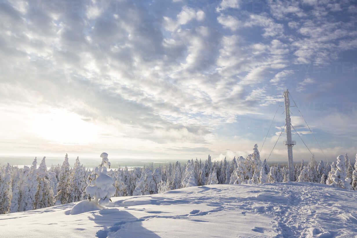Scandinavia, Finland, Rovaniemi, Forest, Trees in wintertime, Aerial mast, Against the sun - SR000545 - Stephan Rech/Westend61