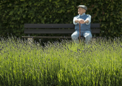 Happy old man sitting on park bench with lavender field in the foreground - UUF000680