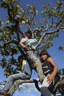 Brazil, Mato Grosso, Primavera do Leste,  Nova Vida, three Xavantes-Amerindian children climbing on tree - FLK000202