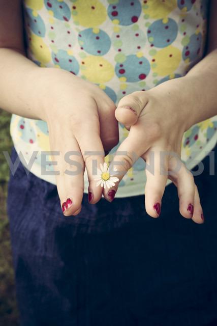 Little girl's hands holding single daisy, Bellis perennis - LVF001359