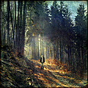 Man walking in forest, composing - DWI000071