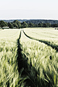 Germany, Lower Saxony, Osnabrueck, Green cornfield with tracks of tractor - MS004007