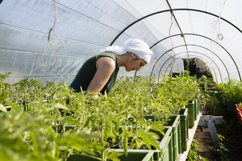 Germany, Brandenburg, Bienenwerder, portrait of female farmer in greenhouse - FX000007