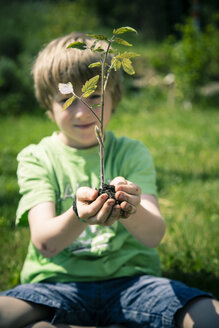 Little boy holding tomato plant in his hands - SARF000701