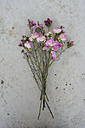Bunch of withered flowers on concrete - AXF000681