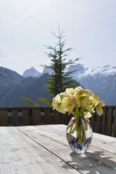 Austria, Abtenau, bunch of winter roses, Helleborus niger, on an old wooden table in front of mountains - AXF000692